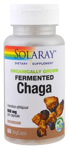 เห็ดหิ้งไซบีเรีย, Fermented Chaga